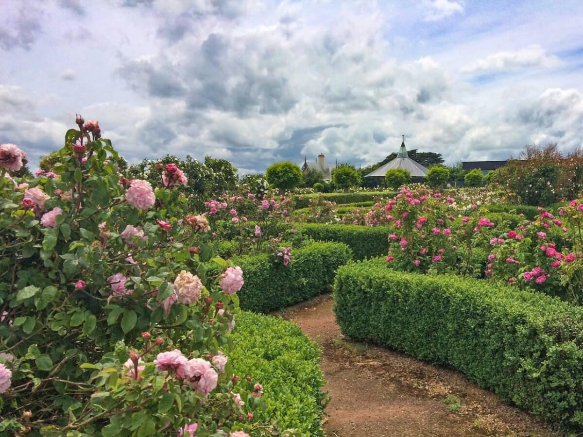 Woolmers Rose Garden